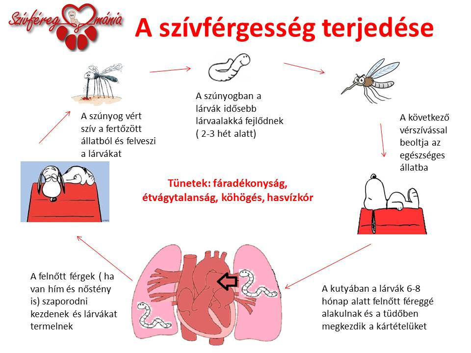 A-szívférgesség-terjedése-újlogo (3)