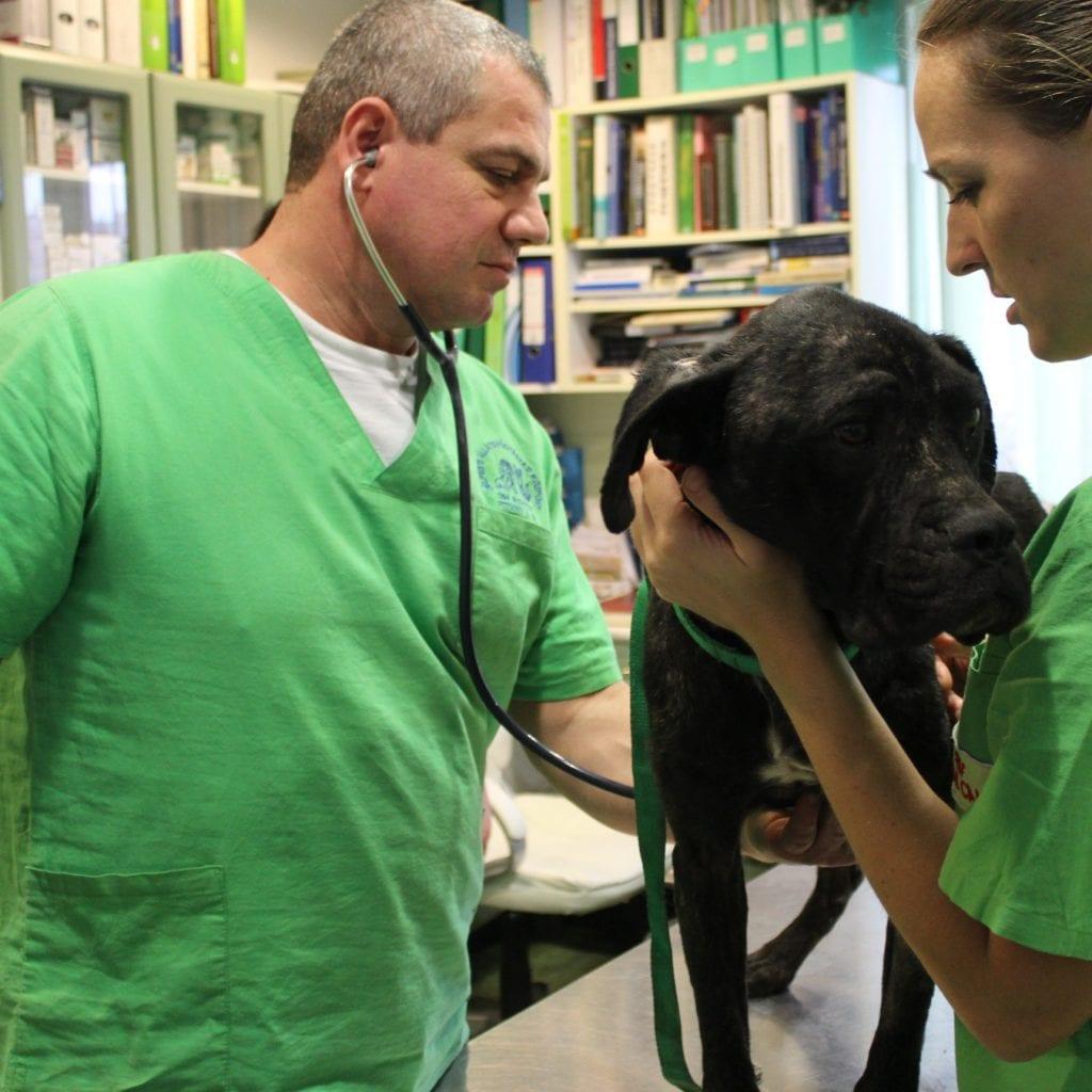 Általános állatorvosi szolgáltatások