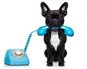 kutya telefonnal