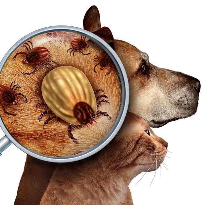 férgek jöttek ki vélemények gyógyszer máj paraziták kezelésére